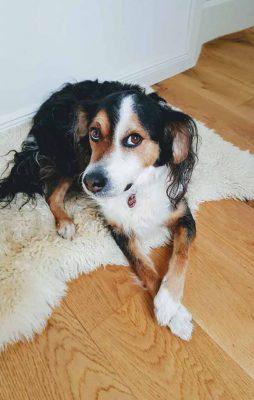 Quellenhof Immobilien - Hund - Immobilienmakler aus Pulheim